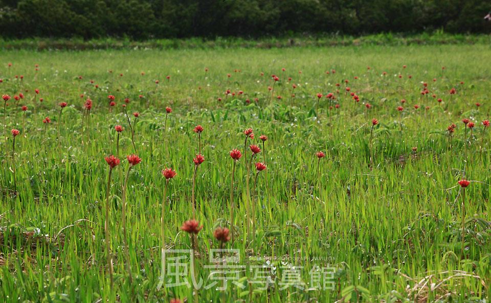 風景写真館 北海道の風景 道央 共和町・積丹町